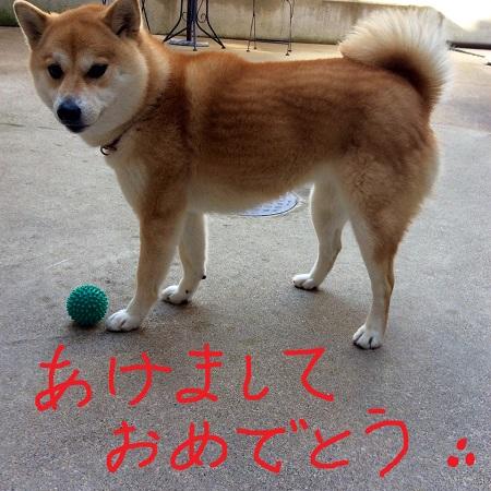 Shinsyun
